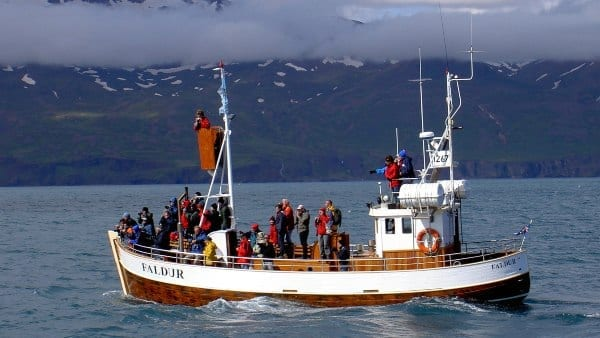 Image of a whale watching boat
